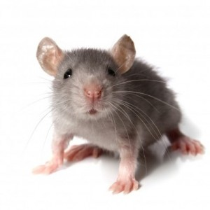 """""""mouse"""""""